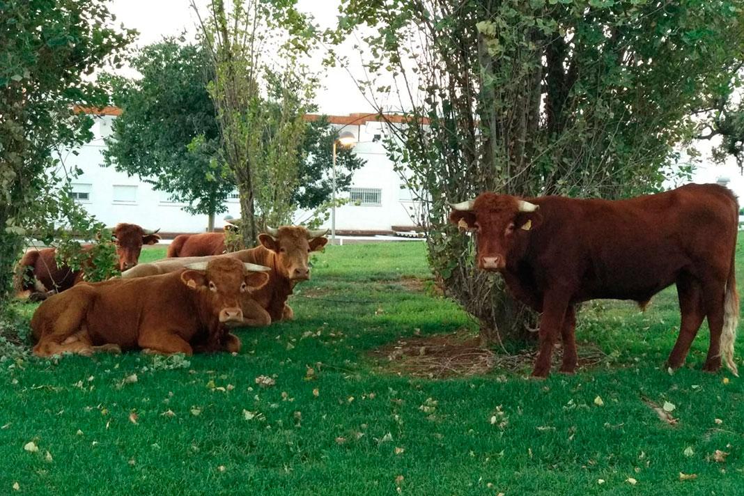 Autorizados los piensos para el ganado ecológico