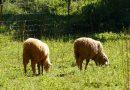 Agricultura inicia el pago de 9,5 millones en concepto de anticipo de ayudas asociadas a la ganadería