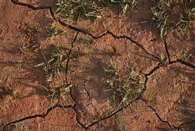 La Fundación Savia exige apoyo para los ganaderos por la sequía