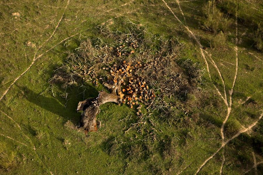 La Junta amplía el plazo de solicitud de ayudas para incrementar el valor medioambiental de los ecosistemas forestales