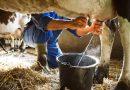 La situación crítica ante el precio de la leche: Los ganaderos solo cobran ahora una peseta más de lo percibido hace 20 años