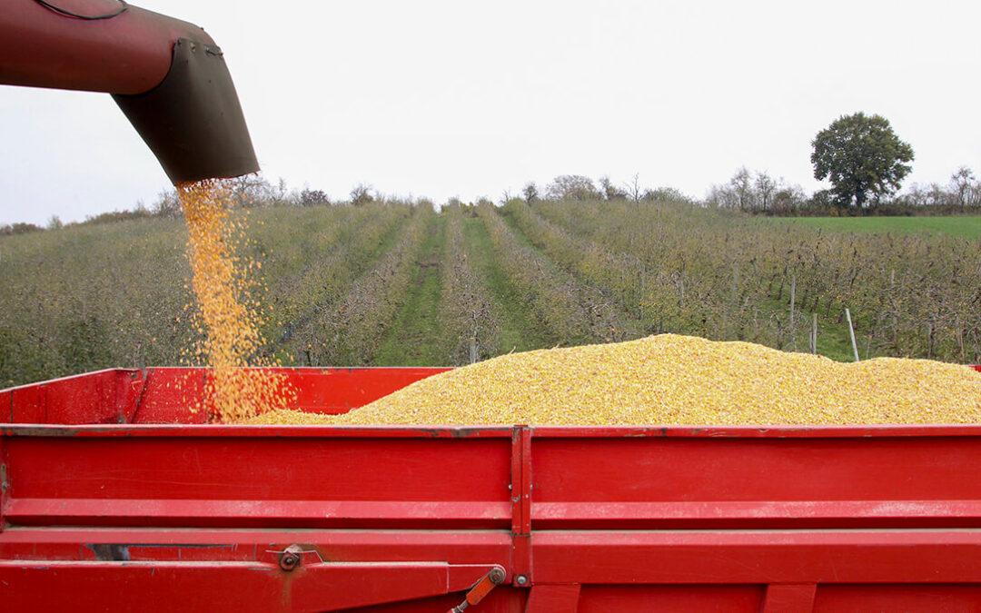 Lo precios mayoristas de los cereales sigue al alza pero se han moderado sensiblemente las cotizaciones